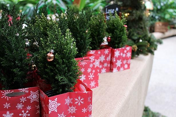 Weihnachten Ganz klassisch