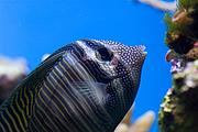 Fische in der Unterwasserwelt Lounge