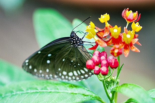 Schmetterlingstagung Biosphäre Potsdam